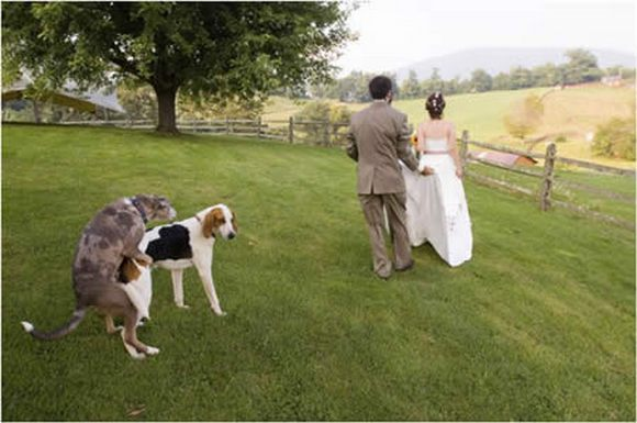 Funny-Wedding-Dogs